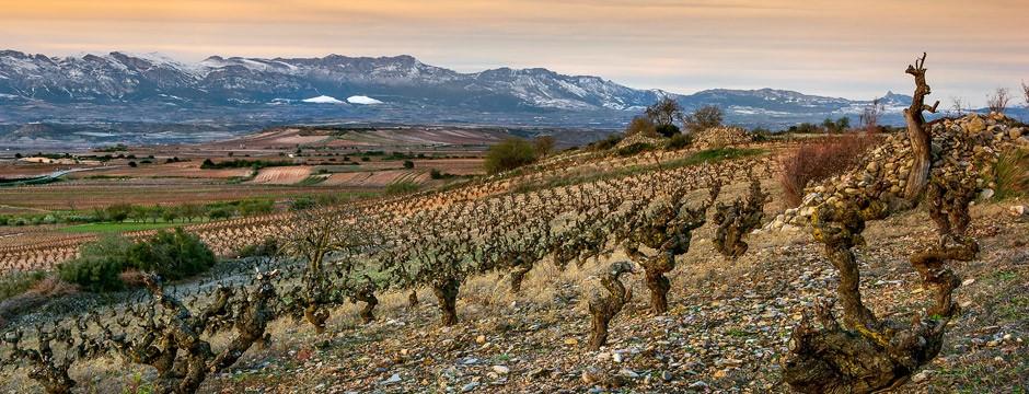 Lagrimas de María - La Rioja - 2015