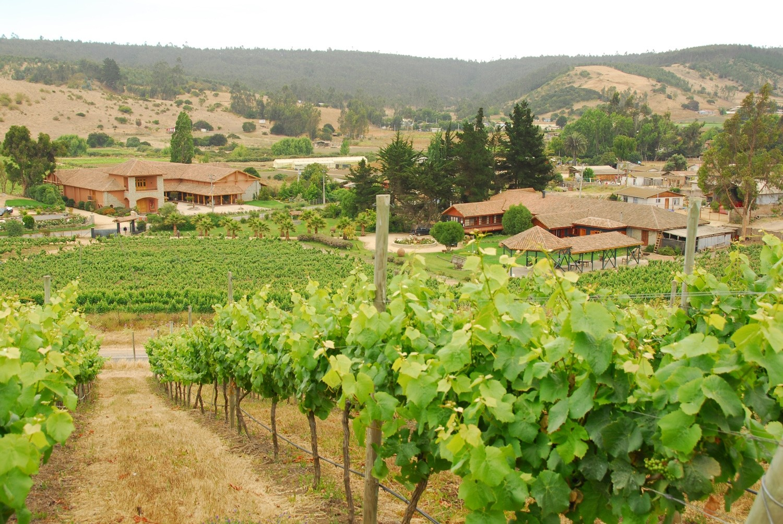 Casa Marín - Lo Abarca Hills Vineyard - Chile - 2011