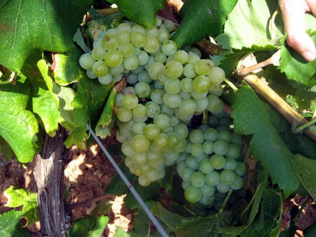 Parellada Caudalia Wine Box Diciembre 2016 Cava