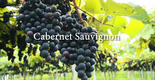 Cabernet Sauvignon. Caudalia Wine Box 2016