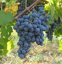 Carmenere Caudalia Wine Box Noviembre 2016