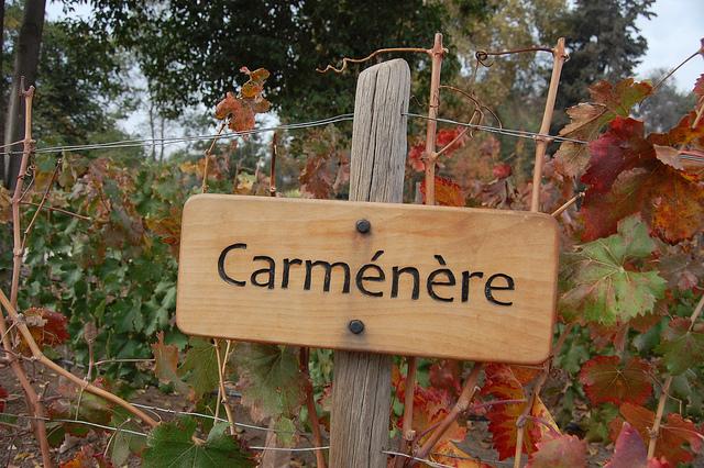 Carmenere Caudalia Wine Box Noviembre 2016 2