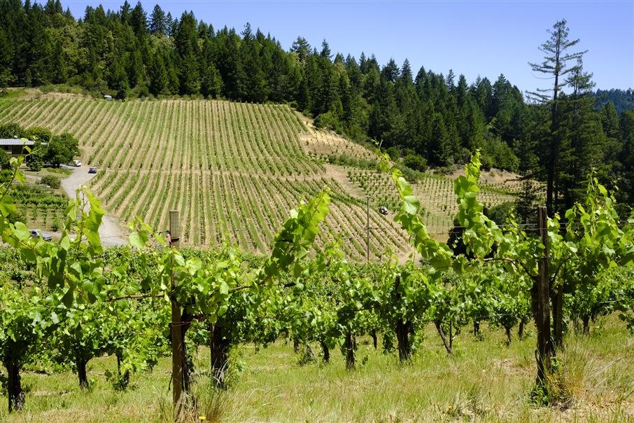 Sonoma Valley. Caudalia Wine Box Agosto 2016