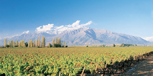 Valle del Maipo. Caudalia Wine Box Agosto 2016
