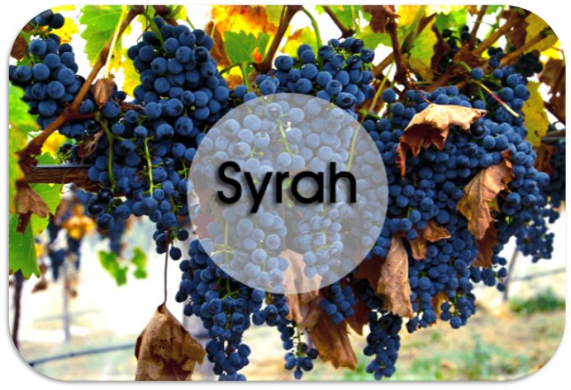 Cepa Syrah. Caudalia Wine Box