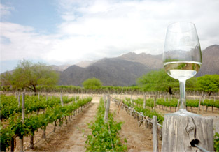Cepa Torrontés Caudalia Wine Box Mayo 2017 argentina, aprender de vinos